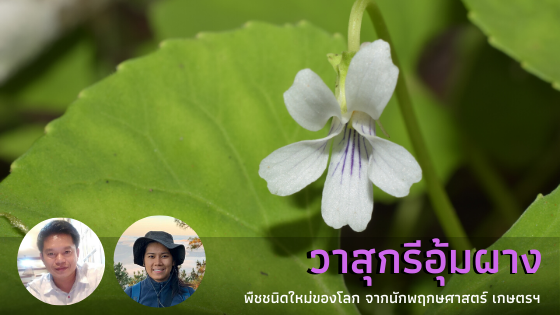 KU Botanists discovered new species of Viola